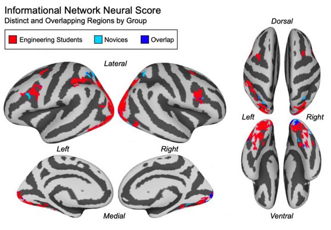 conceptos cerebro