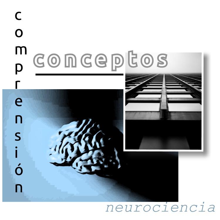 cerebro conceptos